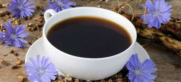 Цикорий: можно ли пить при панкреатите?