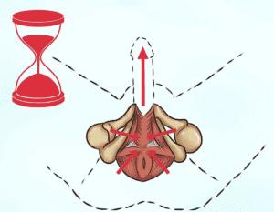 Препарат делает гладкие мышцы пениса эластичными