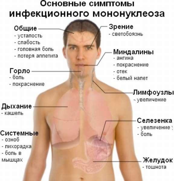 Характеристика и признаки цитомегаловируса
