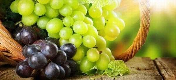 Можно ли виноград при панкреатите: влияние на поджелудочную железу