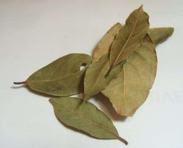 Лавровый лист от цистита ванночка
