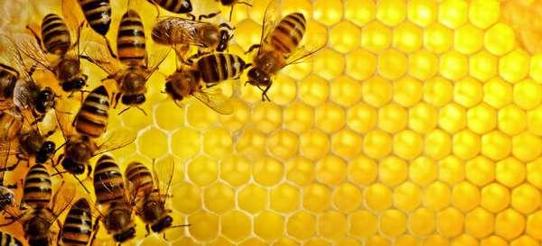 Разрешен ли мед при развитии панкреатита?
