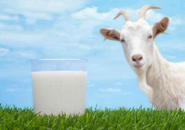 молоко коз