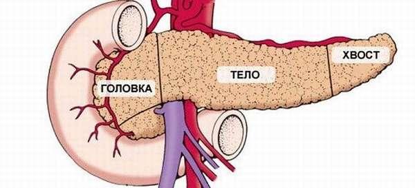 Анатомия и патологии головки поджелудочной железы
