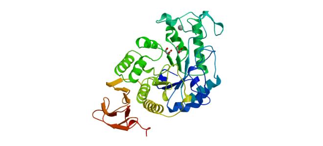 Уровень альфа-амилазы в крови при панкреатите и ее роль в человеческом организме
