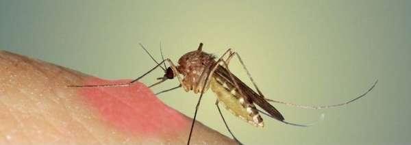 Прыщи на теле у ребенка чешутся и похожи на укусы комаров: причины появления, как избавиться от симптомов